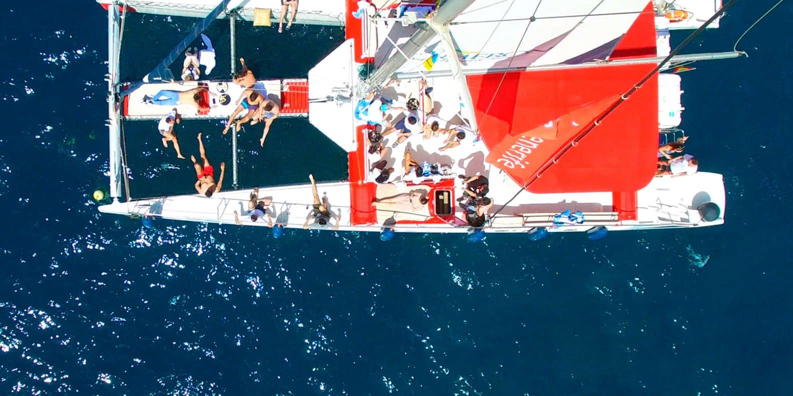 White Tenerife catamaran whale watching